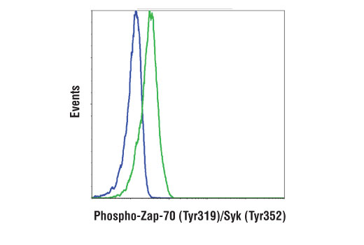Monoclonal Antibody - Phospho-Zap-70 (Tyr319)/Syk (Tyr352) (65E4) Rabbit mAb (Alexa Fluor® 488 Conjugate), UniProt ID P43403, Entrez ID 6850 #73382 - Immunology and Inflammation