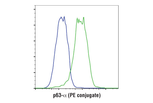 Flow cytometric analysis of ME-180 (green) and MCF7 (blue) cells using p63-α (D2K8X) XP<sup>®</sup> Rabbit mAb (PE conjugate).