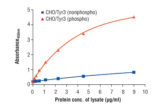 Figure 2. The relationship between protein concentration of phospho or nonphospho lysates and the absorbance at 450 nm as detected by the PathScan<sup>®</sup> Phospho-Tyro3 (panTyr) Sandwich ELISA Kit is shown. Unstarved CHO cells were cultured (85% confluence) and transfected with human Tyro3 for 6 hrs, then lysed with or without addition of phosphatase inhibitors to the lysis buffer (phospho or nonphospho lysate, respectively).
