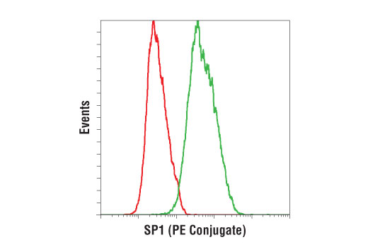Flow cytometric analysis of HeLa cells using SP1 (D4C3) Rabbit mAb (PE Conjugate) (green) compared to Rabbit (DA1E) mAb IgG XP<sup>®</sup> Isotype Control (PE Conjugate) #5742 (red).