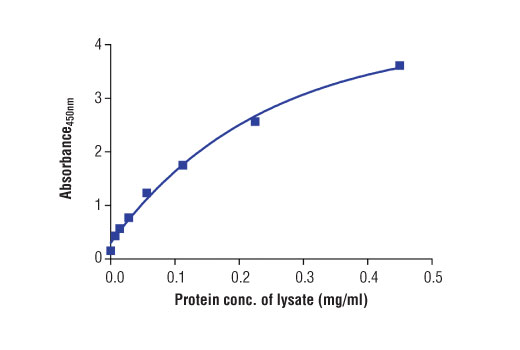 Figure 2. The relationship between protein concentration of HeLa lysates and the absorbance at 450 nm as detected by the PathScan<sup>®</sup> Total HDAC4 Sandwich ELISA Kit is shown. Unstarved HeLa cells (85% confluence) were harvested and then lysed.