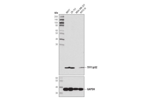 Monoclonal Antibody Immunohistochemistry Paraffin Growth Factor Activity