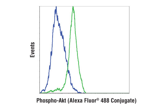 Flow cytometric analysis of serum-starved NIH/3T3 cells, untreated (blue) or treated with mouse platelet-derived growth factor BB (200 ng/ml, 15 min; green), using Phospho-Akt (Thr308) (D25E6) XP<sup>®</sup> Rabbit mAb (Alexa Fluor<sup>®</sup> 488 Conjugate).