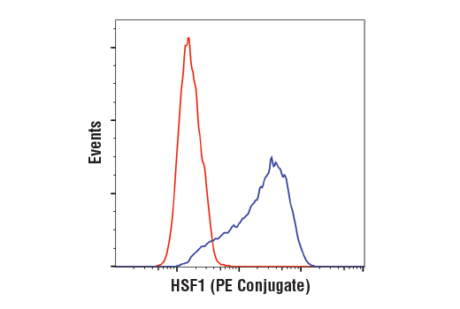 Flow cytometric analysis of HeLa cells using HSF1 (D3L8I) Rabbit mAb (PE Conjugate) (blue) compared to a concentration-matched Rabbit (DA1E) mAb IgG XP<sup>®</sup> Isotype Control (PE Conjugate) #5742 (red).