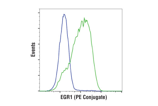 Monoclonal Antibody Flow Cytometry EGR1
