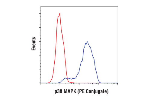 Flow cytometric analysis of HeLa cells using p38 MAPK (D13E1) XP<sup>®</sup> Rabbit mAb (PE Conjugate) (blue) compared to concentration-matched Rabbit (DA1E) mAb IgG XP<sup>® </sup>Isotype Control (PE Conjugate) #5742 (red).
