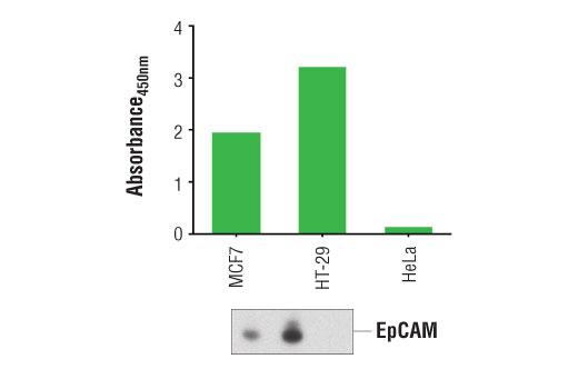 Image 1: PathScan® Total EpCAM Sandwich ELISA Kit