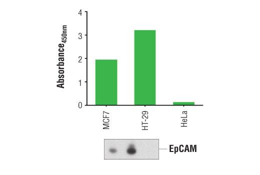 ELISA Kit ELISA Protein Complex Binding