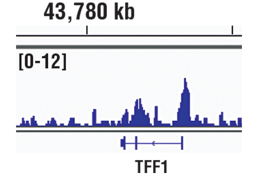 Chromatin IP-seq Image 6