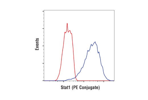 Flow cytometric analysis of ACHN cells using Stat1 (D1K9Y) Rabbit mAb (PE Conjugate) (blue) compared to concentration-matched Rabbit (DA1E) mAb IgG XP<sup>® </sup>Isotype Control (PE Conjugate) #5742 (red).