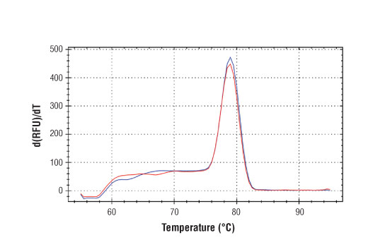 PCR product melting curves were obtained for real-time PCR reactions performed using SimpleChIP<sup>®</sup> Human c-Fos Upstream Primers. Data is shown for both duplicate PCR reactions using 20 ng of total DNA. The melt curve consists of 80 melt cycles, starting at 55°C with increments of 0.5°C per cycle. Each peak is formed from the degradation of a single PCR product.