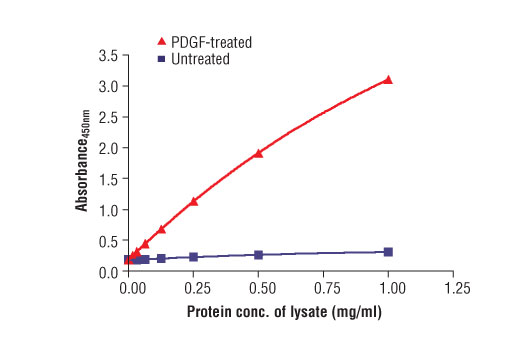 Figure 2. The relationship between the protein concentration of the lysate from untreated and PDGF-treated NIH/3T3 cells and the absorbance at 450 nm is shown.