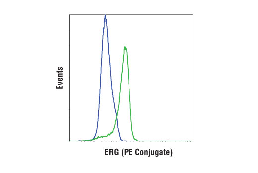 Monoclonal Antibody Flow Cytometry ERG