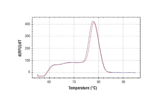 PCR product melting curves were obtained for real-time PCR reactions performed using SimpleChIP<sup>®</sup> Human Nanog Promoter Primers. Data is shown for both duplicate PCR reactions using 20 ng of total DNA. The melt curve consists of 80 melt cycles, starting at 55°C with increments of 0.5°C per cycle. Each peak is formed from the degradation of a single PCR product.