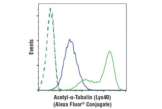 Monoclonal Antibody - Acetyl-α-Tubulin (Lys40) (D20G3) XP® Rabbit mAb (Alexa Fluor® 488 Conjugate), UniProt ID P68363, Entrez ID 10376 #35652