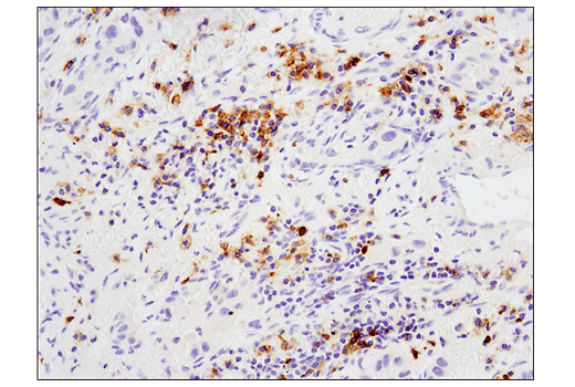 Image 12: Human T Cell Co-inhibitory and Co-stimulatory Receptor IHC Antibody Sampler Kit