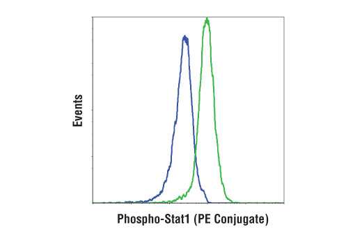 Flow cytometric analysis of Jurkat cells, untreated (blue) or treated with hIFN-α1 #8927 (green), using Phospho-Stat1 (Tyr701) (D4A7) Rabbit mAb (PE Conjugate).