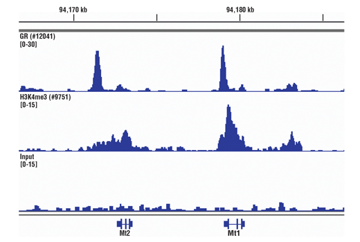 Chromatin IP-seq Image Product Gallery Navigation3