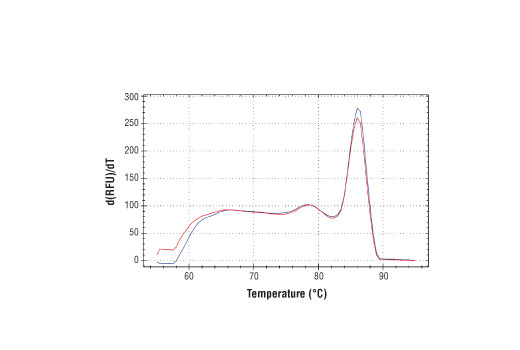 PCR product melting curves were obtained for real-time PCR reactions performed using SimpleChIP<sup>®</sup> Human MEF2A Exon 1 Primers. Data is shown for both duplicate PCR reactions using 20 ng of total DNA. The melt curve consists of 80 melt cycles, starting at 55°C with increments of 0.5°C per cycle. Each peak is formed from the degradation of a single PCR product.