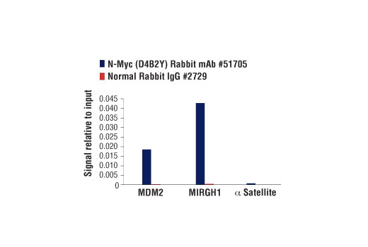 Chromatin immunoprecipitations were performed with cross-linked chromatin from IMR-32 cells and either N-Myc (D4B2Y) Rabbit mAb or Normal Rabbit IgG #2729 using SimpleChIP<sup>®</sup> Enzymatic Chromatin IP Kit (Magnetic Beads) #9003. The enriched DNA was quantified by real-time PCR using human MIR17HG intron 1 primers, SimpleChIP<sup>®</sup> Human MDM2 Intron 2 Primers #90678, and SimpleChIP<sup>®</sup> Human α Satellite Repeat Primers #4486. The amount of immunoprecipitated DNA in each sample is represented as signal relative to the total amount of input chromatin, which is equivalent to one.