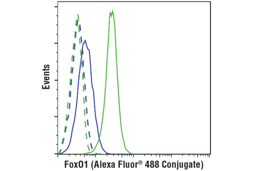 Flow cytometric analysis of Jurkat cells (blue) and IGROV-1 cells (green) using FoxO1 (C29H4) Rabbit mAb (Alexa Fluor® 488 Conjugate) (solid lines) or concentration-matched Rabbit (DA1E) mAb IgG XP<sup>®</sup> Isotype Control (Alexa Fluor<sup>®</sup> 488 Conjugate) #2975 (dashed lines).