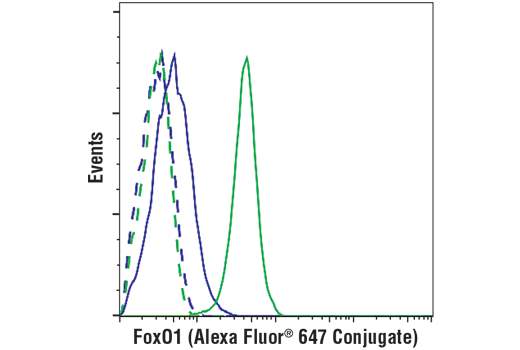 Flow cytometric analysis of Jurkat cells (blue) and IGROV-1 cells (green) using FoxO1 (C29H4) Rabbit mAb (Alexa Fluor<sup>®</sup> 647 Conjugate) (solid lines) or concentration-matched Rabbit (DA1E) mAb IgG XP<sup>®</sup> Isotype Control (Alexa Fluor<sup>®</sup> 647 Conjugate) #2985 (dashed lines).