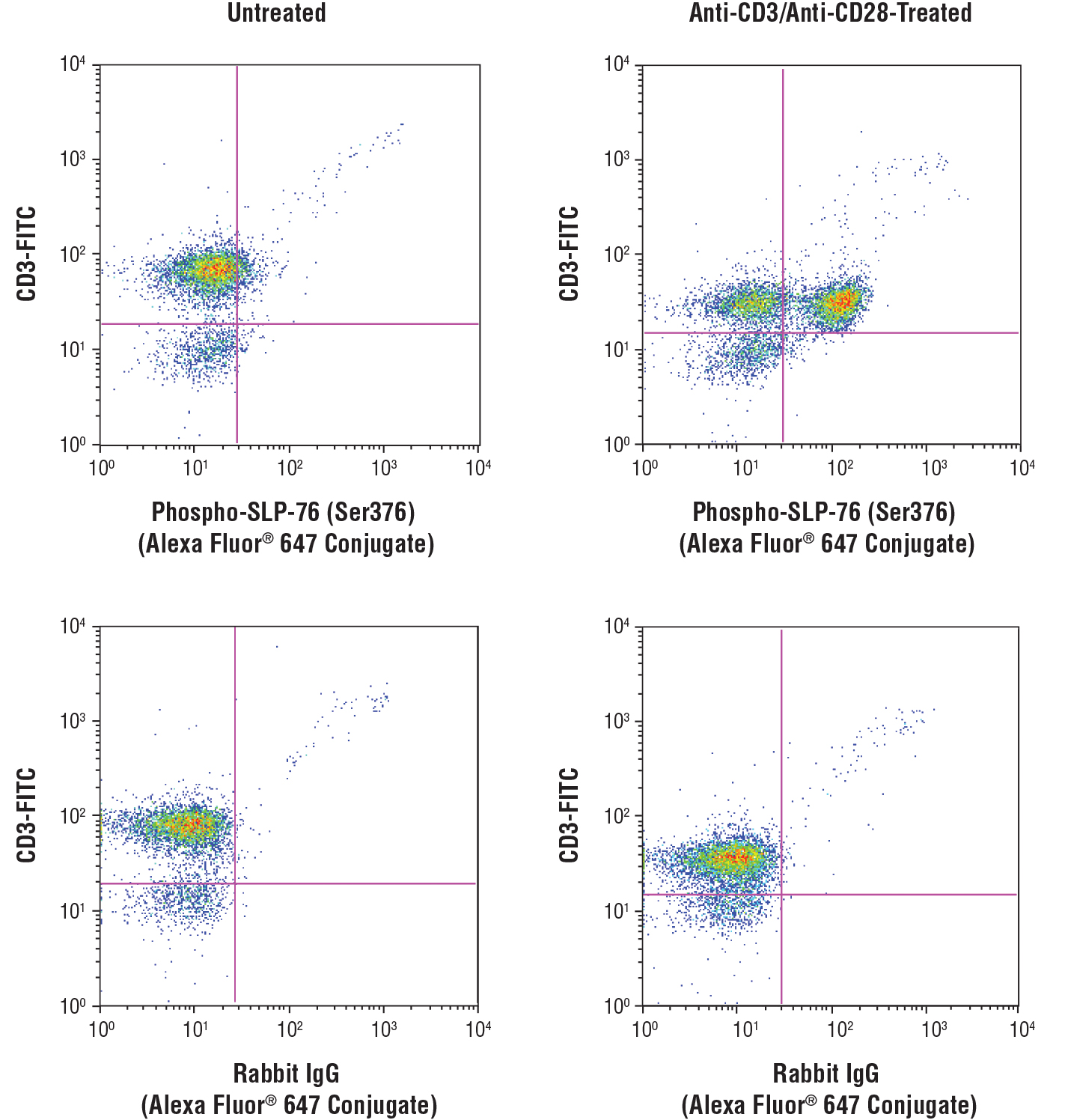 Flow cytometric analysis of human peripheral blood mononuclear cells, untreated (left column) or treated with cross-linked anti-CD3 plus anti-CD28 (10 μg/ml each, 15 min; right column), using Phospho-SLP-76 (Ser376) (D7S1K) XP® Rabbit mAb (Alexa Fluor® 647 Conjugate) (top row) or concentration-matched Rabbit (DA1E) mAb IgG XP® Isotype Control (Alexa Fluor® 647 Conjugate) #2985 (bottom row), and co-stained with a CD3 antibody.