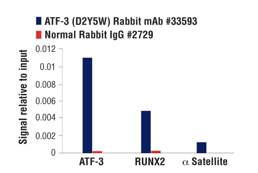 Chromatin immunoprecipitations were performed with cross-linked chromatin from HCT 116 cells and either ATF-3 (D2Y5W) Rabbit mAb or Normal Rabbit IgG #2729 using SimpleChIP<sup>®</sup> Plus Enzymatic Chromatin IP Kit (Magnetic Beads) #9005. The enriched DNA was quantified by real-time PCR using SimpleChIP<sup>®</sup> Human ATF-3 Exon 1 Primers #66427, human RUNX2 intron 5 primers, and SimpleChIP<sup>®</sup> Human α Satellite Repeat Primers #4486. The amount of immunoprecipitated DNA in each sample is represented as signal relative to the total amount of input chromatin, which is equivalent to one.