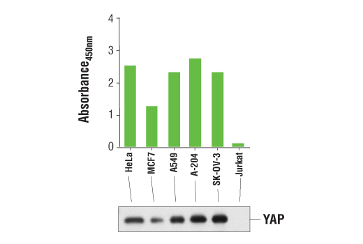 Image 1: PathScan® Total YAP Sandwich ELISA Kit