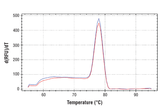 PCR product melting curves were obtained for real-time PCR reactions performed using SimpleChIP<sup>®</sup> Mouse TULP4 Promoter Primers. Data is shown for both duplicate PCR reactions using 20 ng of total DNA. The melt curve consists of 80 melt cycles, starting at 55°C with increments of 0.5°C per cycle. Each peak is formed from the degradation of a single PCR product.