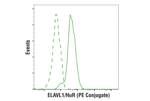 Monoclonal Antibody Flow Cytometry elavl1