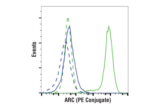Monoclonal Antibody - ARC (D7Q3G) Rabbit mAb (PE Conjugate) - Flow Cytometry, UniProt ID O60936, Entrez ID 8996 #89210