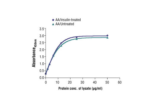 Figure 2: The relationship between the protein concentration of the lysate from amino acid (AA)/untreated and AA/insulin-treated HEK-293T cells and the absorbance at 450 nm is shown.