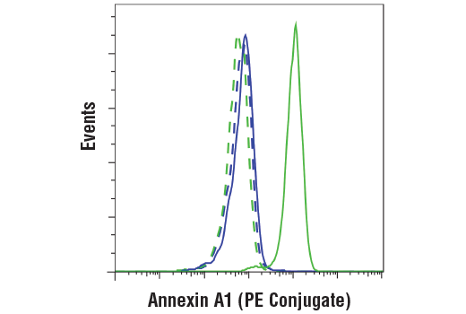 Flow cytometric analysis of 293T cells (blue) or ACHN cells (green) using Annexin A1 (D5V2T) XP<sup>®</sup> Rabbit mAb (PE Conjugate) (solid lines) or concentration-matched Rabbit (DA1E) mAb IgG XP<sup>®</sup> Isotype Control (PE Conjugate) #5742 (dashed lines).