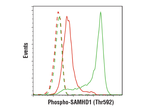 Flow cytometric analysis of THP-1 cells, treated with TPA (80 nM, 16 hr; red) or untreated (green), using Phospho-SAMHD1 (Thr592) (D7O2M) Rabbit mAb (solid lines) or concentration-matched Rabbit (DA1E) mAb IgG XP<sup>®</sup> Isotype Control #3900 (dashed lines). Anti-rabbit IgG (H+L), F(ab')<sub>2</sub> Fragment (Alexa Fluor<sup>®</sup> 488 Conjugate) #4412 was used as a secondary antibody.