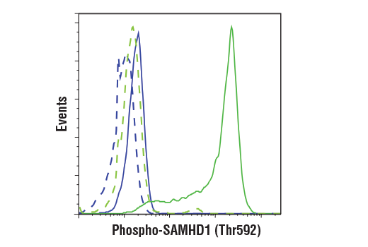 Flow cytometric analysis of Jurkat cells (blue) and THP-1 cells (green) using Phospho-SAMHD1 (Thr592) (D7O2M) Rabbit mAb (solid lines) or a concentration-matched Rabbit (DA1E) mAb IgG XP<sup>®</sup> Isotype Control #3900 (dashed lines). Anti-rabbit IgG (H+L), F(ab')<sub>2</sub> Fragment (Alexa Fluor<sup>®</sup> 488 Conjugate) #4412 was used as a secondary antibody.