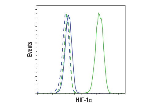 Flow cytometric analysis of U-2 OS cells, untreated (blue) or treated with DMOG (1 mM, 6 h; green), using HIF-1α (D1S7W) XP<sup>®</sup> Rabbit mAb (solid lines) or concentration-matched Rabbit (DA1E) mAb IgG XP<sup>®</sup> Isotype control #3900 (dashed lines). Anti-rabbit IgG (H+L), F(ab')<sub>2</sub> Fragment (Alexa Fluor® 488 Conjugate) #4412 was used as a secondary antibody.