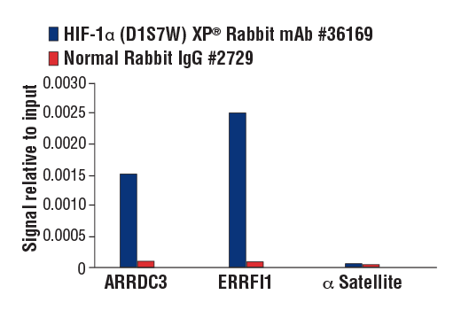 Chromatin immunoprecipitations were performed with cross-linked chromatin from MCF7 cells treated with cobalt chloride (100 μM, overnight) and either HIF-1α (D1S7W) XP<sup>®</sup> Rabbit mAb or Normal Rabbit IgG #2729, using SimpleChIP<sup>®</sup> Plus Enzymatic Chromatin IP Kit (Magnetic Beads) #9005. The enriched DNA was quantified by real-time PCR using human ARRDC3 downstream primers, SimpleChIP<sup>®</sup> Human ERRFI1 Upstream Primers #31180, and SimpleChIP<sup>®</sup> Human α Satellite Repeat Primers #4486. The amount of immunoprecipitated DNA in each sample is represented as signal relative to the total amount of input chromatin, which is equivalent to one.