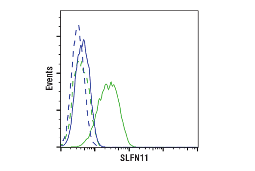 Monoclonal Antibody - SLFN11 (D8W1B) Rabbit mAb, UniProt ID Q7Z7L1, Entrez ID 91607 #34858 - Cell Cycle / Checkpoint Control