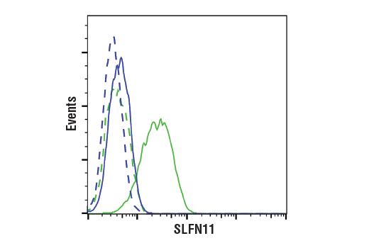 Monoclonal Antibody - SLFN11 (D8W1B) Rabbit mAb, UniProt ID Q7Z7L1, Entrez ID 91607 #34858, Slfn11