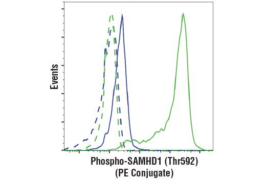 Flow cytometric analysis of Jurkat cells (blue) and THP-1 cells (green) using Phospho-SAMHD1 (Thr592) (D7O2M) Rabbit mAb (PE Conjugate) (solid lines) or a concentration-matched Rabbit (DA1E) mAb IgG XP<sup>®</sup> Isotype Control (PE Conjugate) #5742 (dashed lines).
