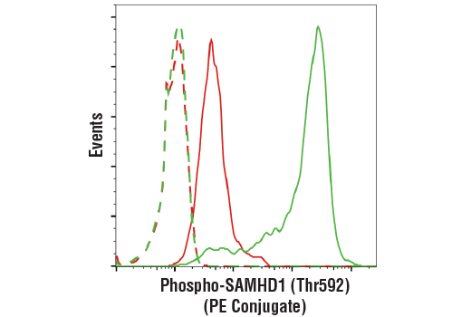 Flow cytometric analysis of THP-1 cells, untreated (green) or treated with TPA #4174 (80 nM, 16 hr; red), using Phospho-SAMHD1 (Thr592) (D7O2M) Rabbit mAb (PE Conjugate) (solid lines) or a concentration-matched Rabbit (DA1E) mAb IgG XP<sup>®</sup> Isotype Control (PE Conjugate) #5742 (dashed lines).