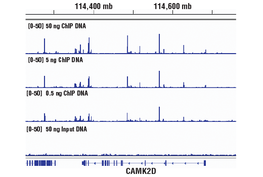 Chromatin Immunoprecipitation Image 2: SimpleChIP® ChIP-seq DNA Library Prep Kit for Illumina®