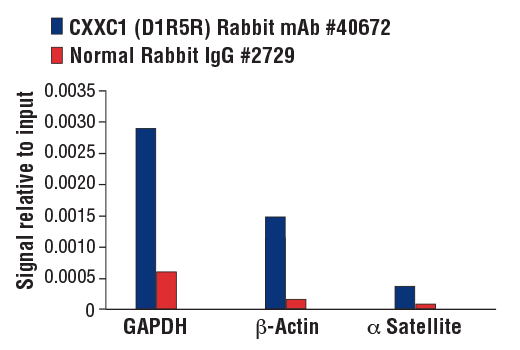 Chromatin immunoprecipitations were performed with cross-linked chromatin from HeLa cells and either CXXC1 (D1R5R) Rabbit mAb or Normal Rabbit IgG #2729 using SimpleChIP<sup>®</sup> Plus Enzymatic Chromatin IP Kit (Magnetic Beads) #9005. The enriched DNA was quantified by real-time PCR using SimpleChIP<sup>®</sup> Human GAPDH Promoter Primers #4471, SimpleChIP<sup>®</sup> Human β-Actin Promoter Primers #13653, and SimpleChIP<sup>®</sup> Human α Satellite Repeat Primers #4486. The amount of immunoprecipitated DNA in each sample is represented as signal relative to the total amount of input chromatin, which is equivalent to one.
