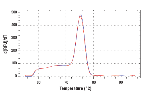 PCR product melting curves were obtained for real-time PCR reactions performed using SimpleChIP<sup>®</sup> Mouse PDX1 Promoter Primers. Data is shown for both duplicate PCR reactions using 20 ng of total DNA. The melt curve consists of 80 melt cycles, starting at 55°C with increments of 0.5°C per cycle. Each peak is formed from the degradation of a single PCR product.