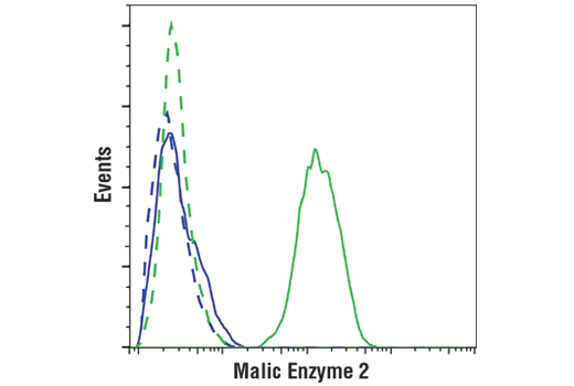 Flow cytometric analysis of BxPC3 cells (negative, blue) and Jurkat cells (positive, green) using Malic Enzyme 2 (E1N3F) XP<sup>®</sup> Rabbit mAb (solid lines) or a concentration-matched Rabbit (DA1E) mAb IgG XP<sup>®</sup> Isotype Control #3900 (dashed lines). Anti-rabbit IgG (H+L), F(ab')<sub>2</sub> Fragment (Alexa Fluor® 488 Conjugate) #4412 was used as a secondary antibody.