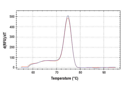 PCR product melting curves were obtained for real-time PCR reactions performed using SimpleChIP<sup>®</sup> Mouse Sox2 Exon1 Primers. Data is shown for both duplicate PCR reactions using 20 ng of total DNA. The melt curve consists of 80 melt cycles, starting at 55°C with increments of 0.5°C per cycle. Each peak is formed from the degradation of a single PCR product.