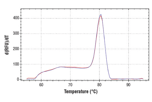 PCR product melting curves were obtained for real-time PCR reactions performed using SimpleChIP<sup>®</sup> Human ID1 5'UTR Primers. Data is shown for both duplicate PCR reactions using 20 ng of total DNA. The melt curve consists of 80 melt cycles, starting at 55°C with increments of 0.5°C per cycle. Each peak is formed from the degradation of a single PCR product.