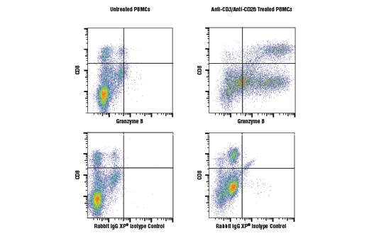 Flow cytometric analysis of human peripheral blood mononuclear cells, untreated (left column) or treated with anti-CD3 plus anti-CD28 (10 μg/ml, 72 hr; right column), using Granzyme B (D2H2F) Rabbit mAb (top row) or concentration-matched Rabbit (DA1E) mAb IgG XP<sup>®</sup> Isotype Control #3900 (bottom row), and co-stained with a CD8 Antibody. Anti-rabbit IgG (H+L), F(ab')<sub>2</sub> Fragment (Alexa Fluor<sup>®</sup> 488 Conjugate) #4412 was used as a secondary antibody.