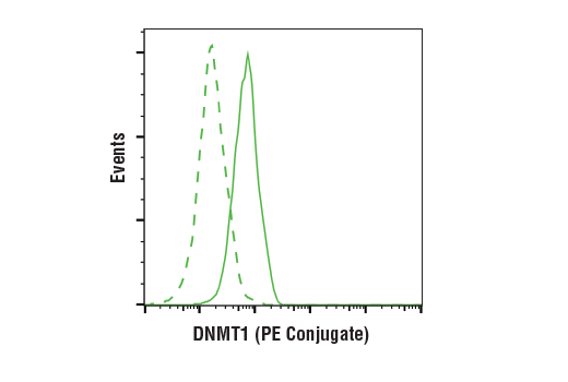 Flow cytometric analysis of COS-7 cells using DNMT1 (D63A6) XP<sup>®</sup> Rabbit mAb (PE Conjugate) (solid line) compared to concentration-matched Rabbit (DA1E) mAb IgG XP<sup>®</sup> Isotype Control (PE Conjugate) #5742 (dashed line).